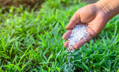 Rasen wird per Hand gedüngt