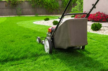 Hoher Rasen wird mit Rasenmäher gemäht