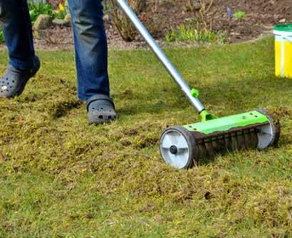 Rasen mit viel Unkraut wird vertikutiert