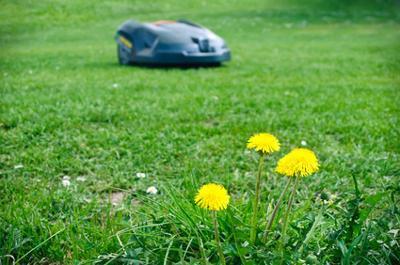 Automatischer Rasenmäher Roboter im Garten